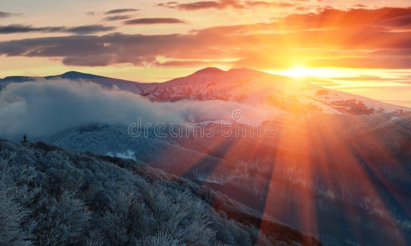Panoramautsikt av vinterberg på soluppgång Landskap med dimmiga kullar och träd som täckas med rimfrost royaltyfri bild