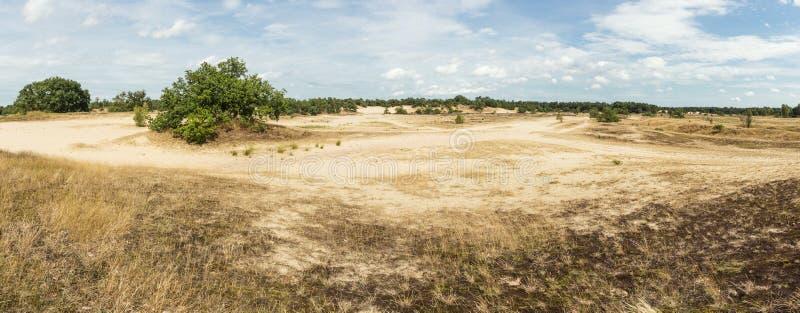 Panoramautsikt dyn av för den Loonse och Drunense sanden arkivfoto