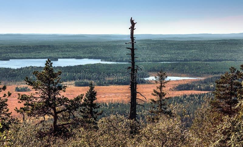 Panoramautsikt från bergöverkanten Vottovaara royaltyfri fotografi
