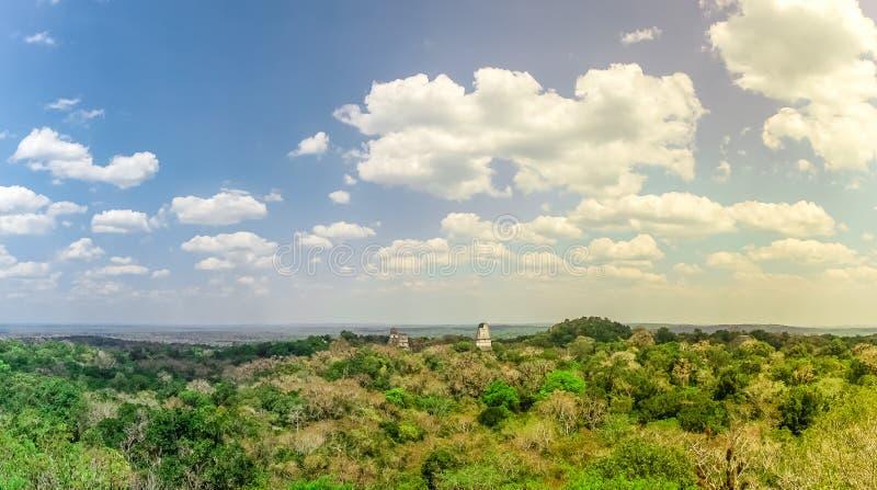 Panoramautsikten över regnskog och fördärvar av Tikal i Guatemala arkivfoton
