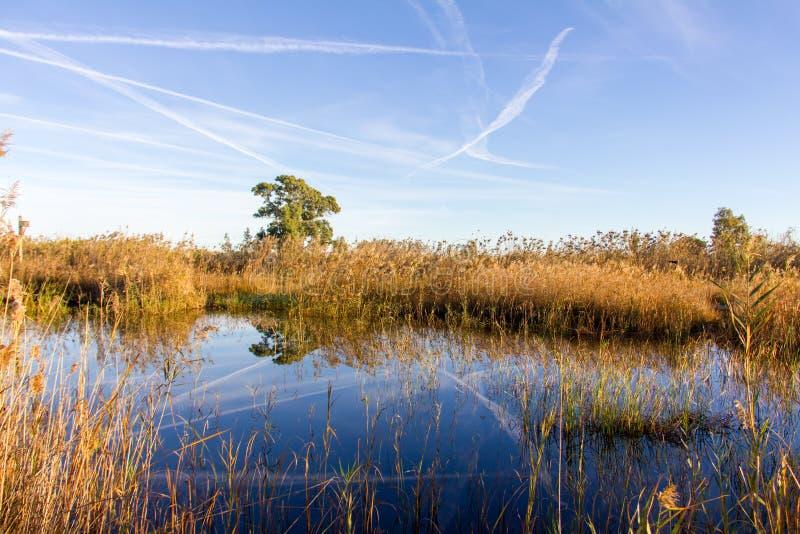 Panoramautsikten av en fågelobservatorium, i de naturliga våtmarkerna parkerar La Marjal i Pego och Oliva arkivfoto