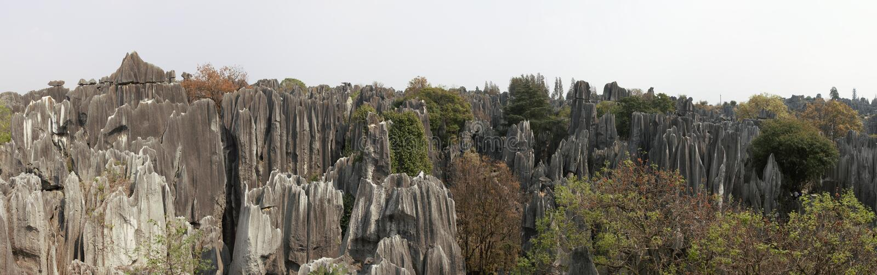 Panoramautsikten av stenskogen i det Kunming, Yunnan landskapet, Kina vet också som Shilin arkivfoton