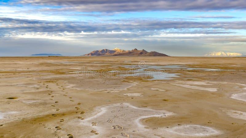 Panoramavoetafdrukken van een mens en een hond op de bruine zandige kust van een meer wordt gestempeld dat stock afbeeldingen