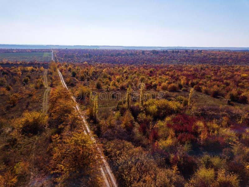 Panoramic aerial view from drone of beautiful landscape with dirt road through autumn forest in a red and yellow tones royalty free stock photo