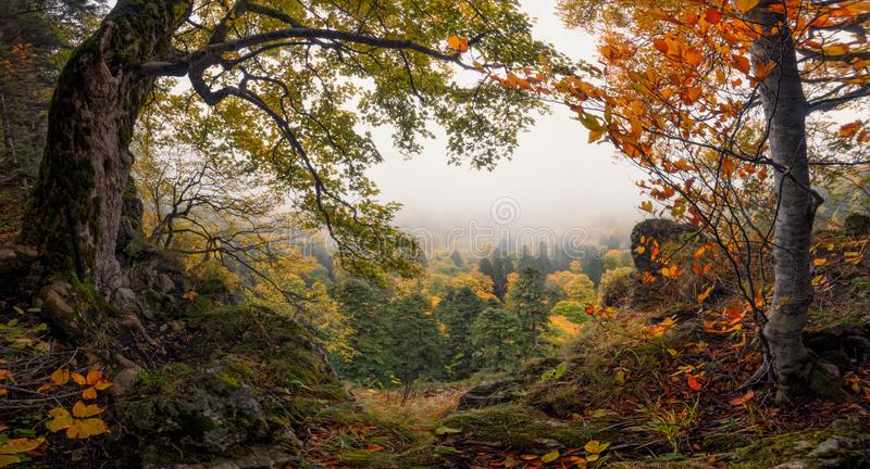 Panoramic Autumn Forest Landscape With View Of Mountain Misty Valley And Colorful Autumn Forest. Enchanted Autumn Foggy Forest Wi. Th Red And Yellow Falling stock photo