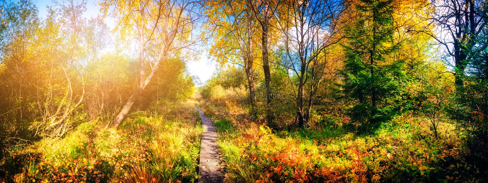 Panoramic autumn landscape with country path. Fall nature background royalty free stock images
