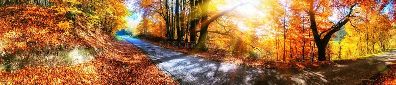 Panoramic autumn landscape with country road in orange tone royalty free stock image