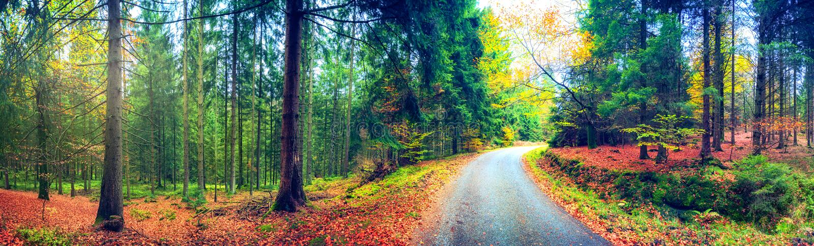 Panoramic autumn landscape with forest road. Fall nature background royalty free stock images