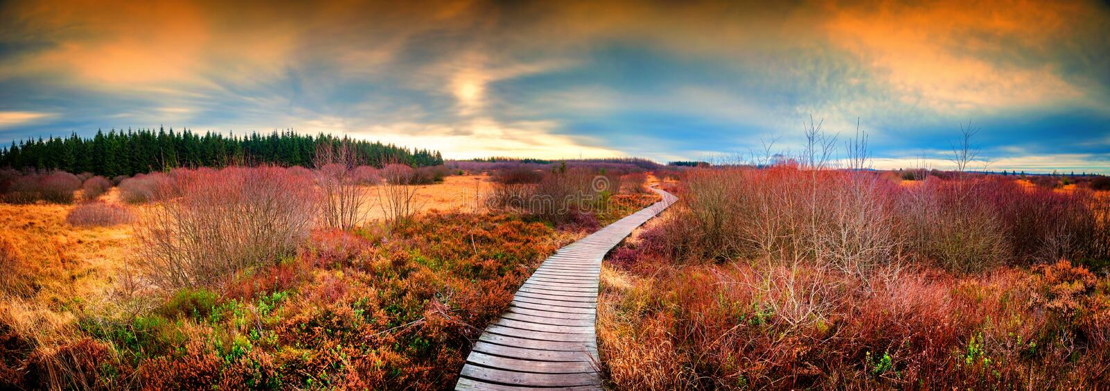 Panoramic autumn landscape with wooden path. Fall nature background. Panoramic autumn landscape with wooden path at sunset. Fall nature background stock image