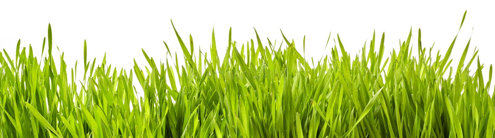 Panoramic banner of fresh green spring grass stock photos