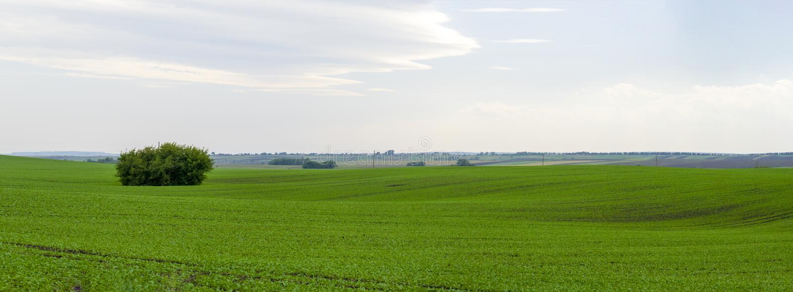 Panoramic beautiful green field royalty free stock images