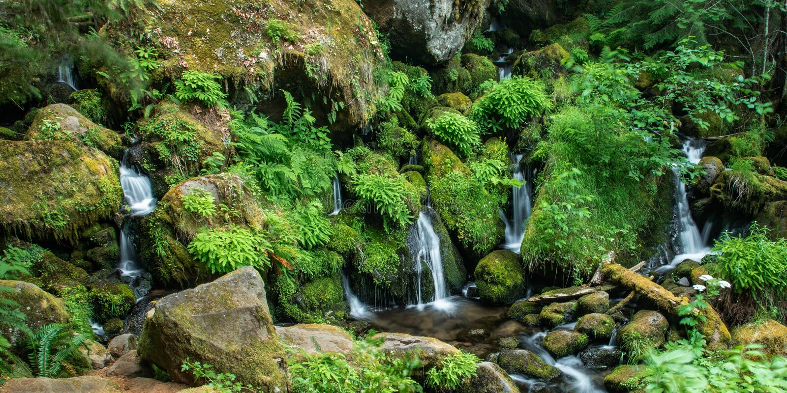 Intimate Waters. Panoramic Composition For Intemate Scene Of Small Cascades Babbling Through Dense Foliage Of Ferns And Moss, Watson Creek, Douglas County royalty free stock photo
