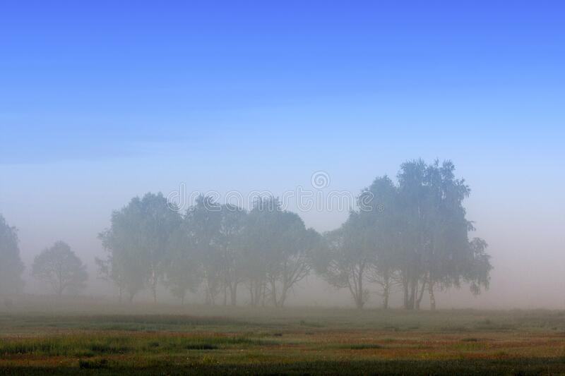 Panoramic early morning view of wetlands and meadows wildlife refuge under dawn fog by the Biebrza river in Poland stock photography