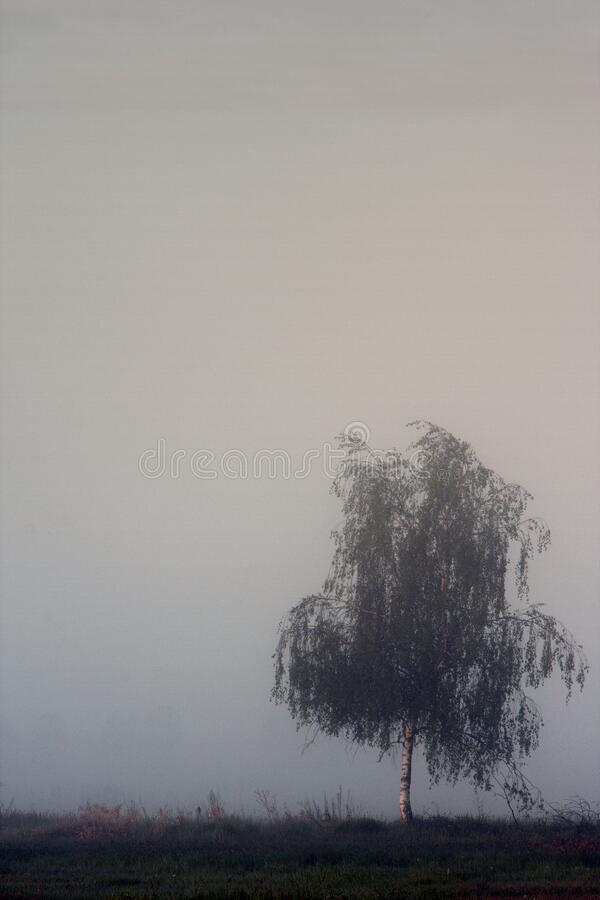 Panoramic early morning view of wetlands and meadows wildlife refuge under dawn fog by the Biebrza river in Poland royalty free stock photo