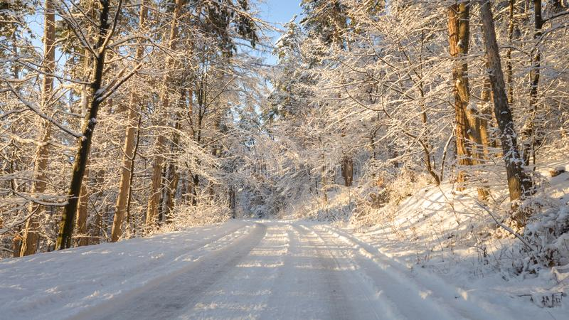 Sunset warm light in winter forest. Panoramic image. Panoramic image of winter road going through the forest, covered in snow stock photo