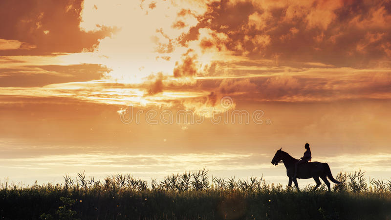 Panoramic image of young woman riding a horse on the meadow royalty free stock images