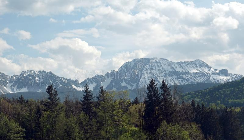 Panoramic landscape with alpine wood and high rocks with snow caps at far away. Beautiful panoramic countryside landscape with alpine forests and high mountains stock photos