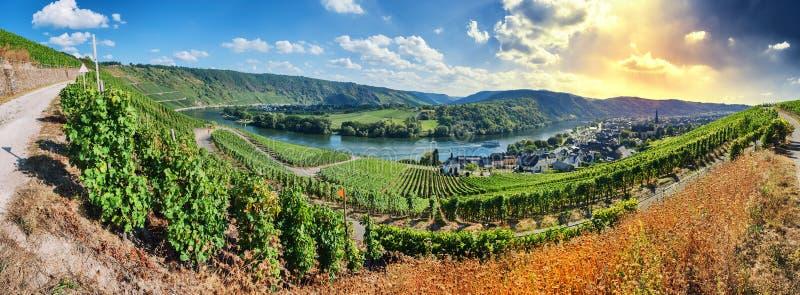 Panoramic landscape with autumn vineyards stock photos