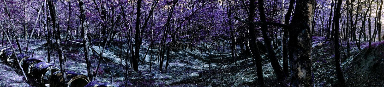 Download Panoramic Landscape Of Fantasy Woods Stock Image - Image: 60709113