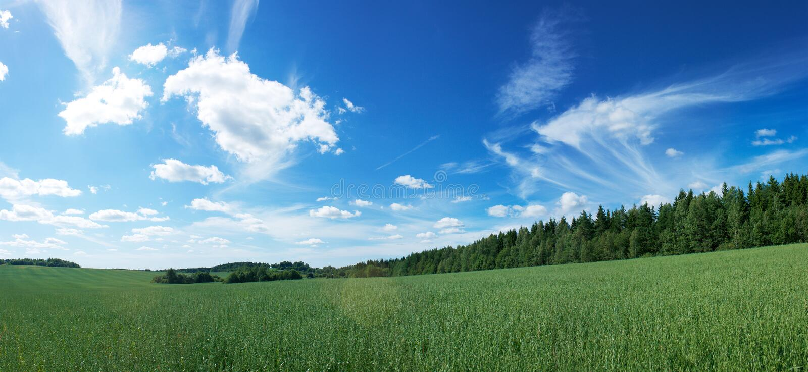 Panoramic Landscape with Green Field and Blue Sky. Panoramic Landscape with Green Field on the Background of Beautiful Clouds and Blue Sky royalty free stock image