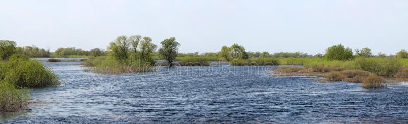 Panoramic landscape with spring flooding of Pripyat River near Borki, Zhytkavichy District of Gomel Region of Belarus. Panoramic landscape with spring flooding royalty free stock photography