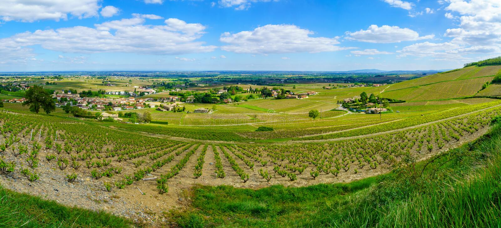 Panoramic landscape of vineyards and countryside in Beaujolais. Rhone department, France stock photography