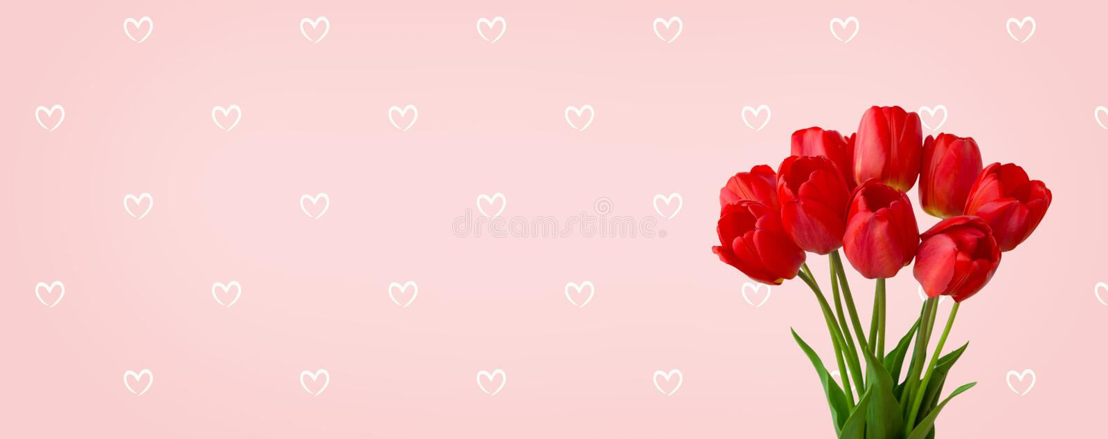 Panoramic light pink background with bouquet red tulip flowers royalty free stock images