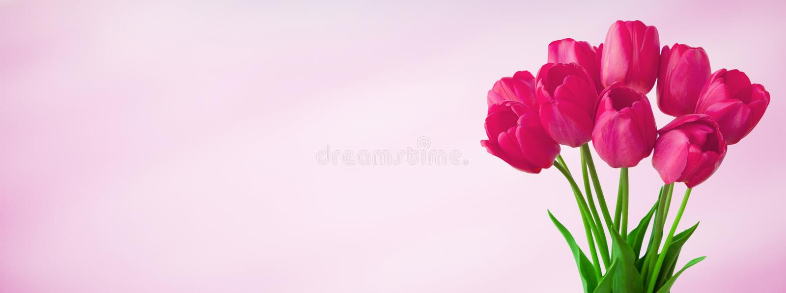 Panoramic light pink background with bouquet tulip flowers royalty free stock images