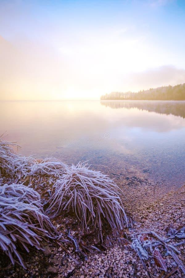 Panoramic morning mist over Lake Bohinj, Slovenia. Concept Winter Landscape. royalty free stock photo