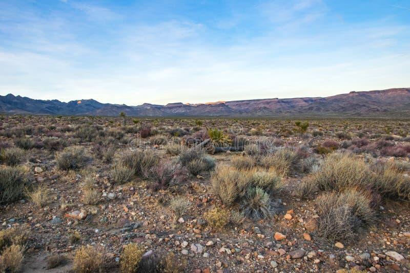 Arizona desert, US southwest. Panoramic picture of Arizona desert at daytime, United States southwest royalty free stock photos