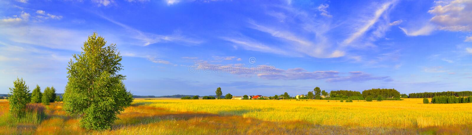Panoramic rural landscape with birch