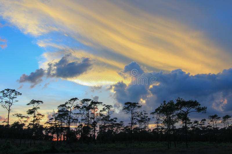 Panoramic scene of trees with sunset background royalty free stock photo