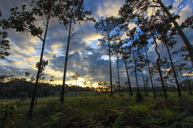 Panoramic scene of trees with sunset background stock images