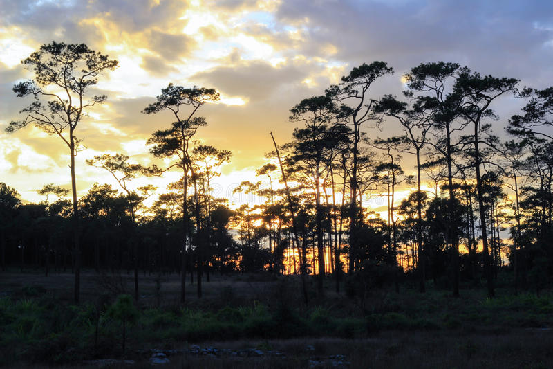 Panoramic scene of trees with sunset background royalty free stock photography