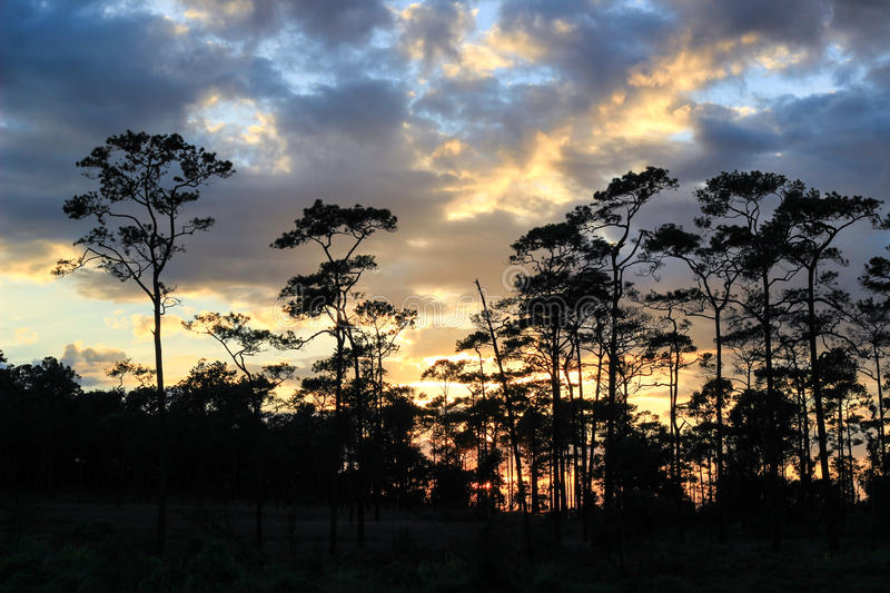 Panoramic scene of trees with sunset background royalty free stock photos