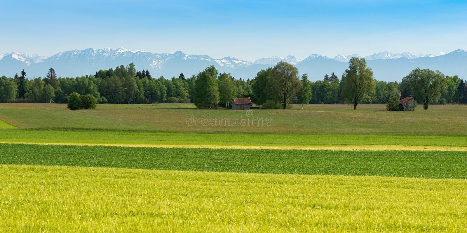 Panoramic scenic Alpine view with fresh spring meadows and snowy mountain peaks stock image