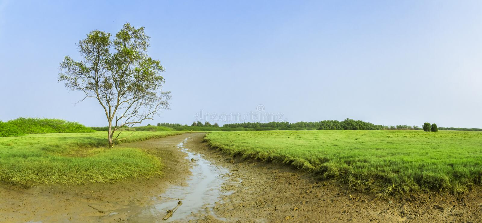 Panoramic, scenic wetlands with green meadows royalty free stock photography