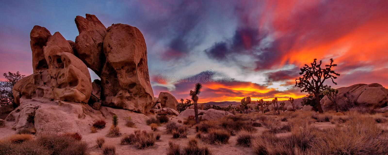 Joshua Tree Sunset. Panoramic shot of a beautifull sunset in the Joshua Tree National Park of California stock images