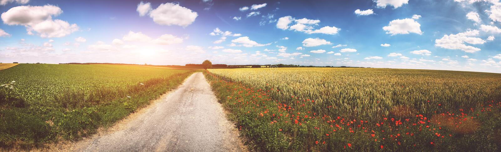 Panoramic summer landscape with country road and poppy flowers royalty free stock image