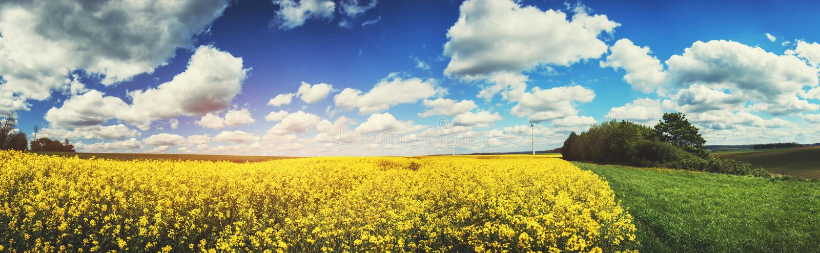 Panoramic summer landscape with rapeseed field stock photography