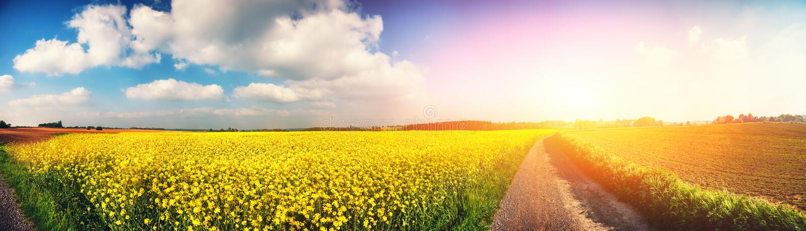 Panoramic summer landscape with rapeseed field stock photo