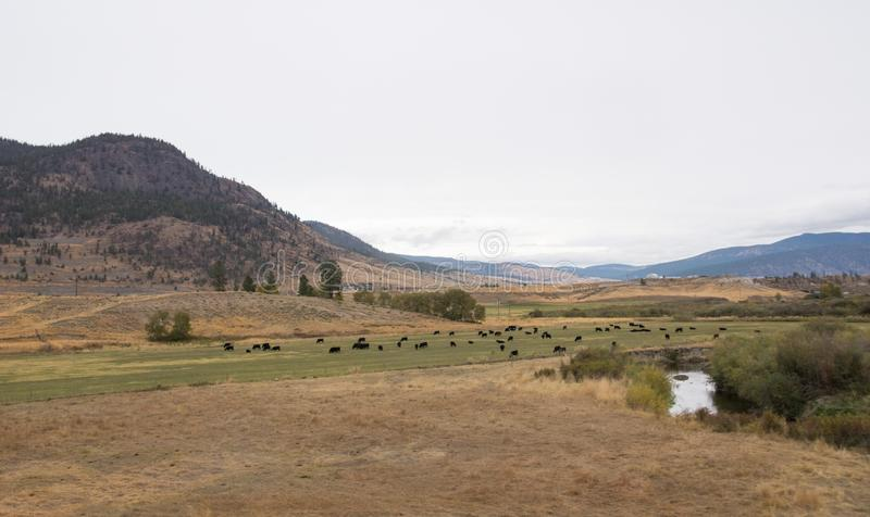 Panoramic valley and mountain near kamloops in Canada, road trip in fall stock photos