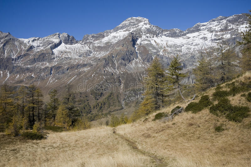 Download Panoramic view on the alps stock photo. Image of tree - 21746588