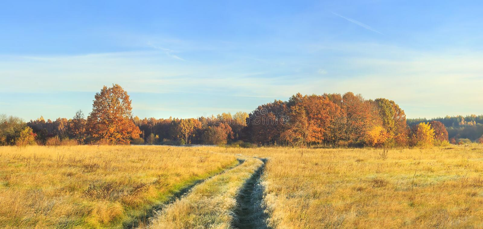 Panoramic view on autumn nature landscape on sunny day. Yellow and red trees on meadow and blue clear sky. Amazing rural scene royalty free stock photography