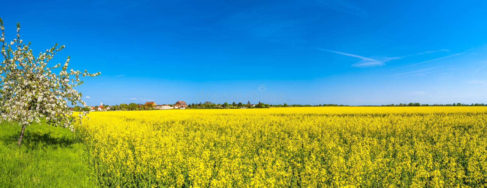 Panoramic view of beautiful farm landscape of rapeseed field in stock photos