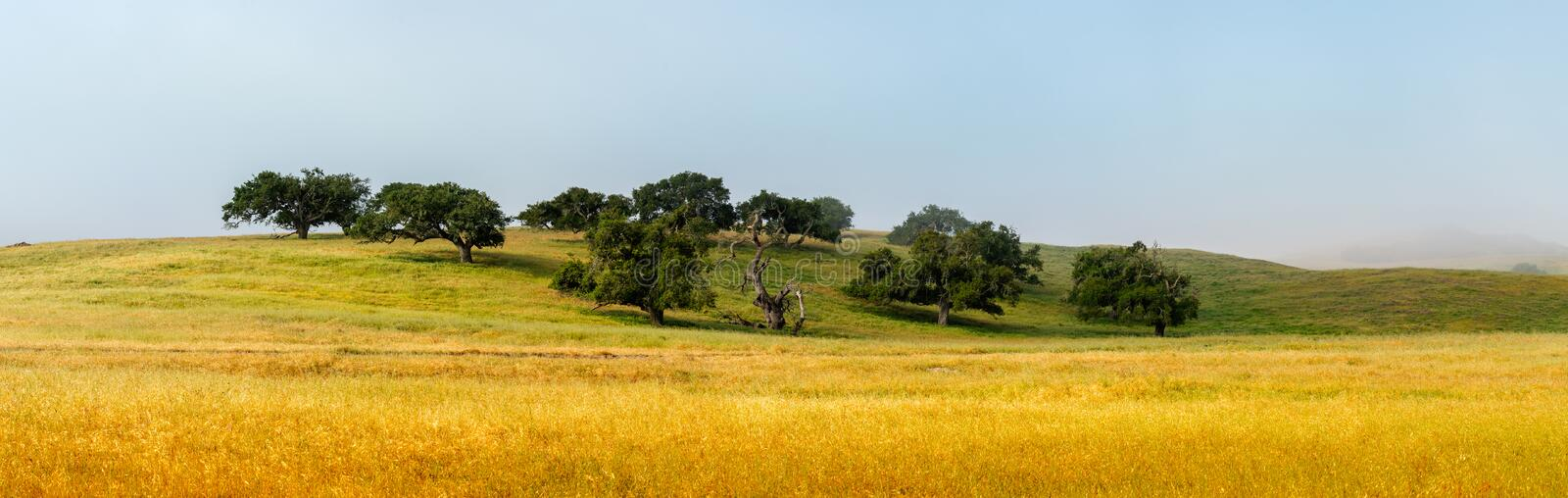 Panoramic View of Beautiful Old Oak Trees With Surrounding Pasture royalty free stock image