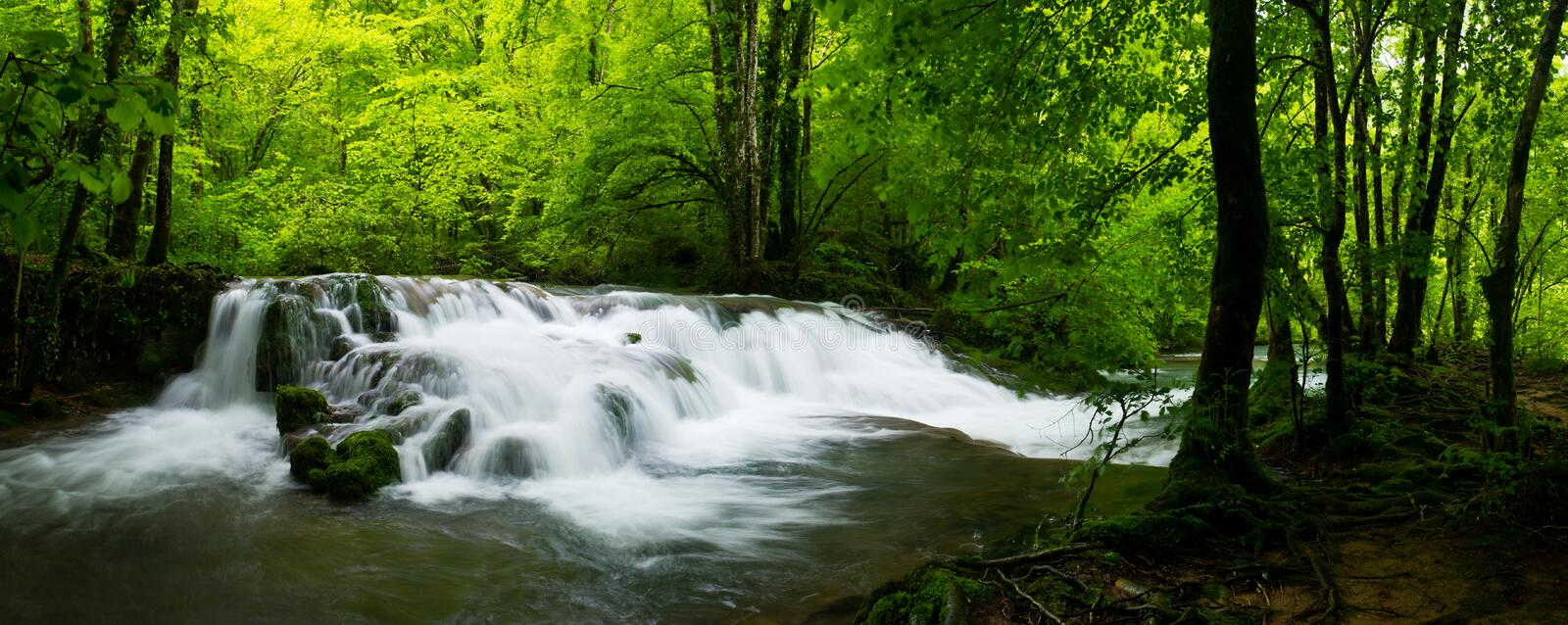 Panoramic view of the beautiful wild brook in jungle-like forest. Panoramic view of the beautiful wild brook in jungle-like green forest stock images