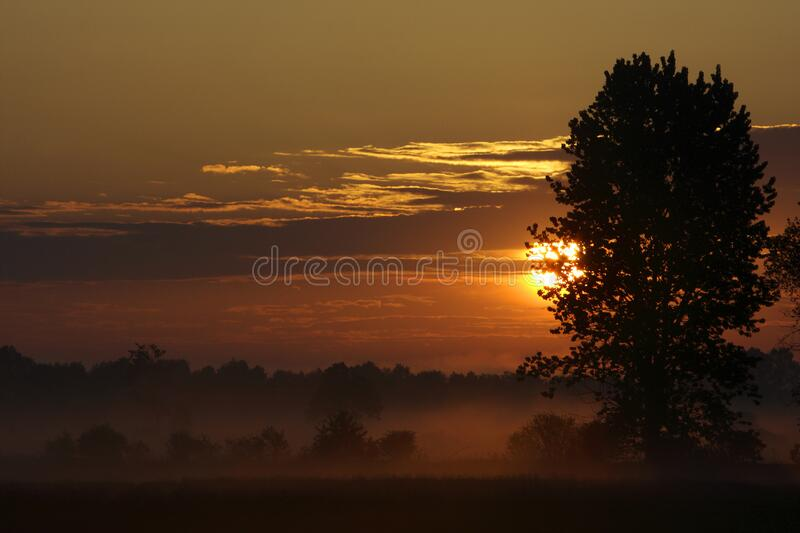 Panoramic view of colorful sunrise over wetlands and meadows wildlife refuge by the Biebrza river in Poland stock photos