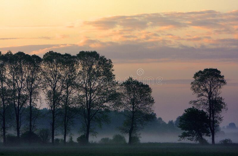 Panoramic view of colorful sunrise over wetlands and meadows wildlife refuge by the Biebrza river in Poland royalty free stock photography