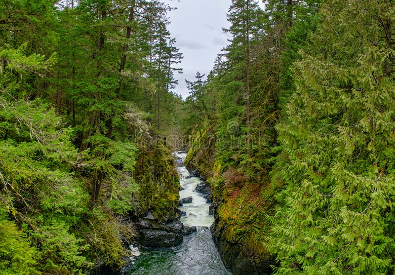 Panoramic view of the Englishman River Falls in Vancouver Island stock image